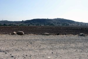 View of safi from north 28_11_13